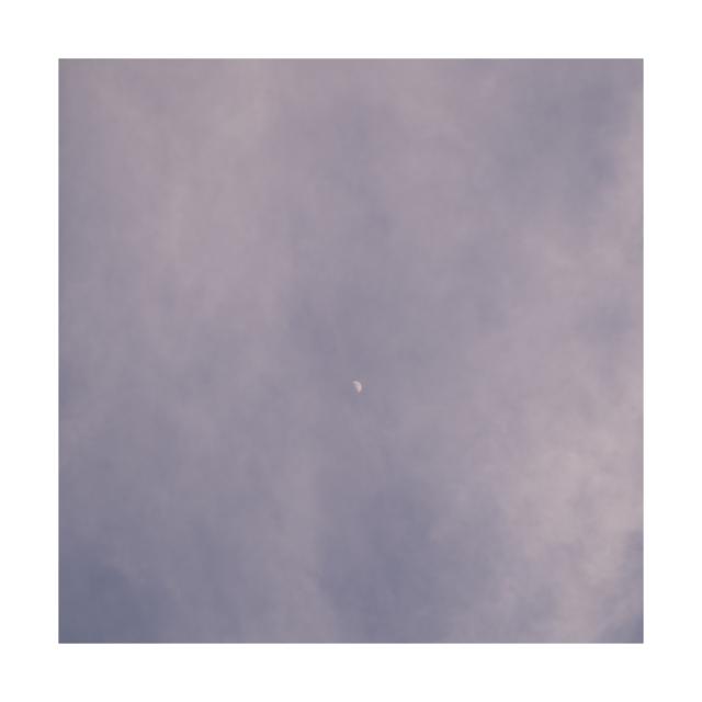 #009 sakura,snow,sky